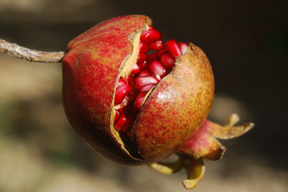 Surprising Health Benefits of Pomegranates